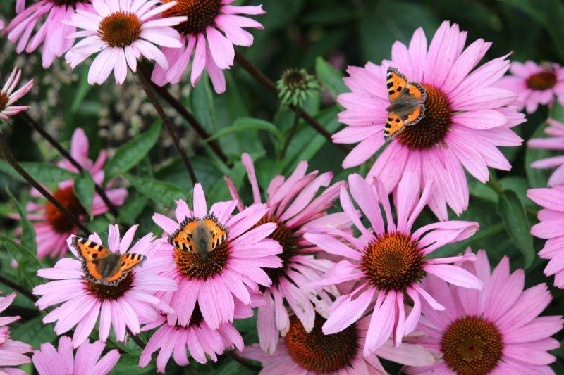Tuinhappy - vlinders in je tuin