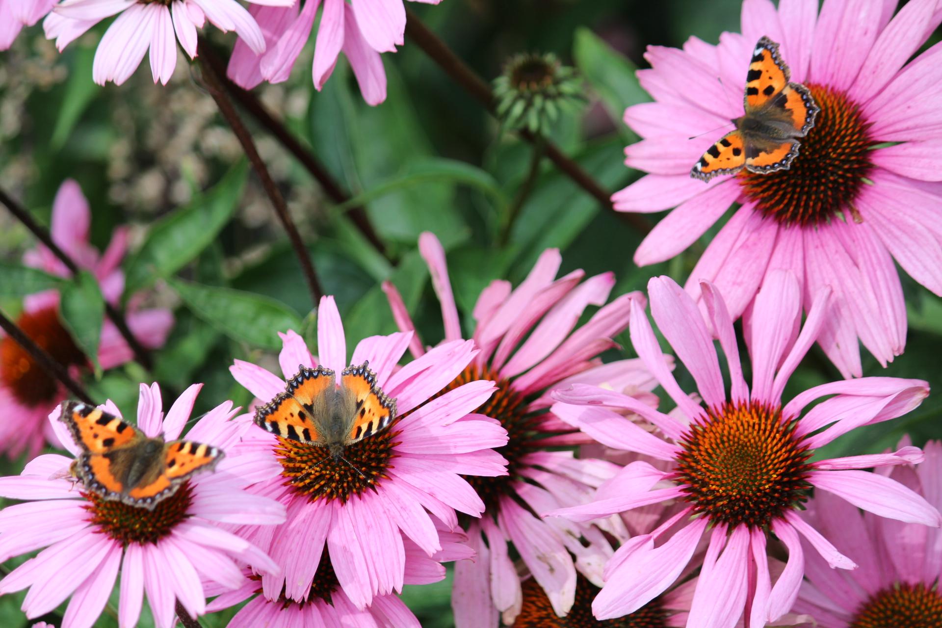 Tuinhappy.nl - vlinders