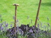 Tuinhappy.nl - lavendel planten
