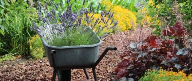 Tuinhappy.nl - Lavendel planten - 1
