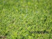 Tuinhappy.nl - groen gazon
