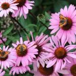 levende tuin met vlinders
