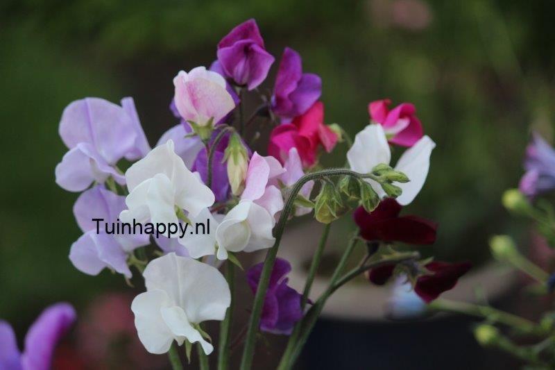 Tuinhappy.nl
