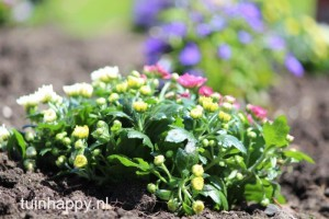 Tuinplanten - tuinonderhoud voorjaar