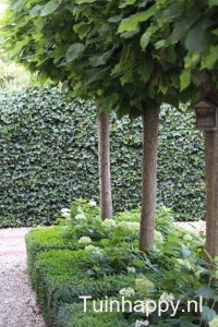 Tuinhappy.nl - buxus 02 - groenere tuin