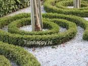 Tuinhappy.nl - buxus