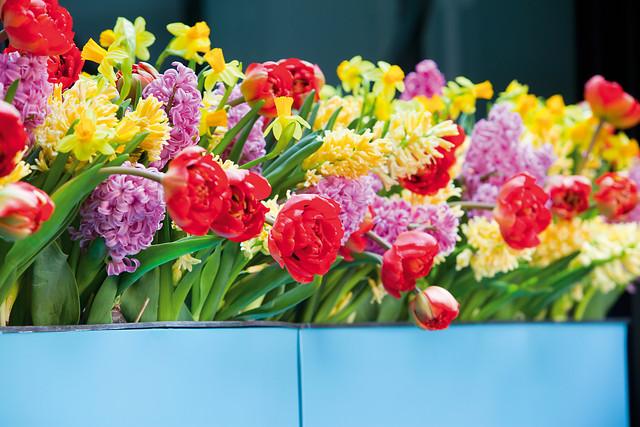 Gemengde bloembollen in bakken