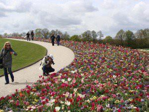 Floriade - Jacqueline van der Kloet - bloembollenmix