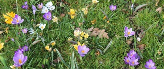 Tuinhappy.nl - bloembollen in gras