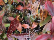 Spinnenwebjes