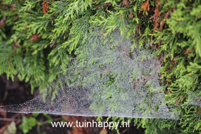 Tuinhappy.nl - spinnenweb