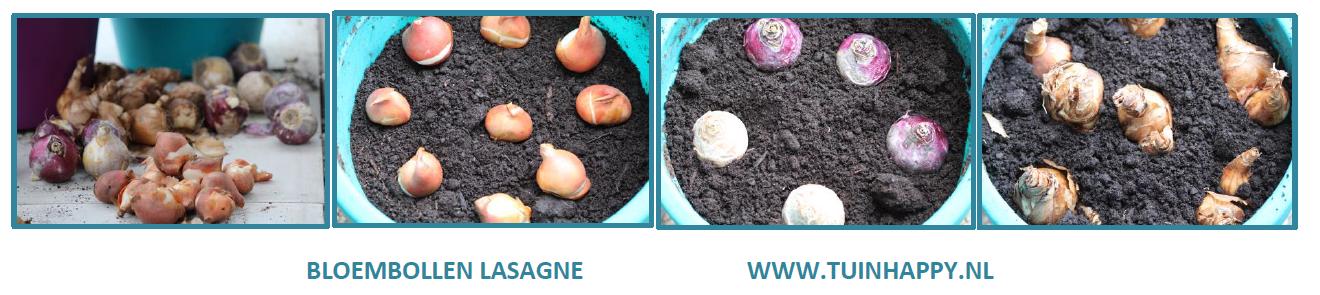Lasagnebeplanting bloembollen