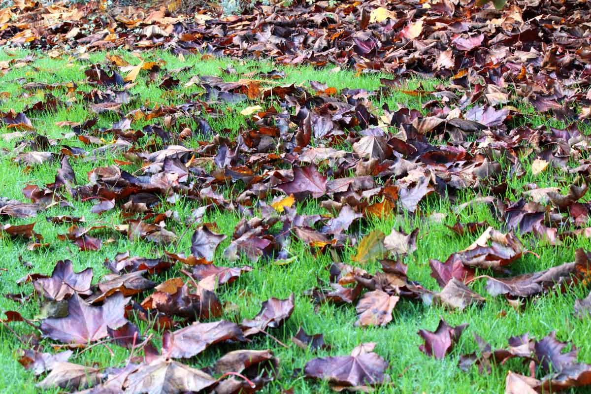 Bladeren op gras