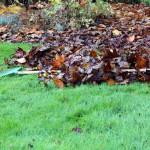 Bladeren wegharken uit gras
