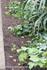 Dek planten af voor de winter