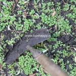Tuinhappy.nl - onkruid verwijderen - schoffelen