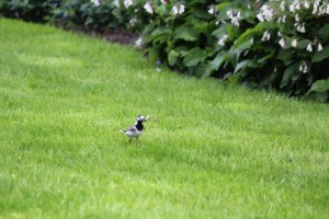 vogel in gras