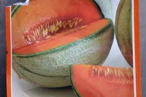 Meloen - zakje zaad