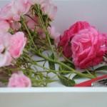 Tuinhappy.nl - afgeknipte rozen