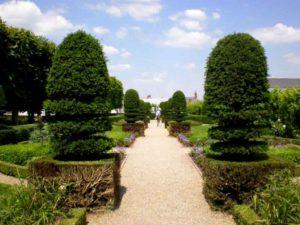 buxus pilaren