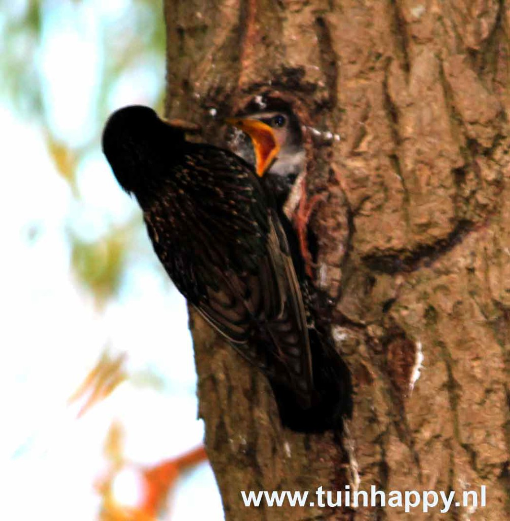 Nestje in de boom