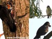 Tuinhappy - vogels in bomen