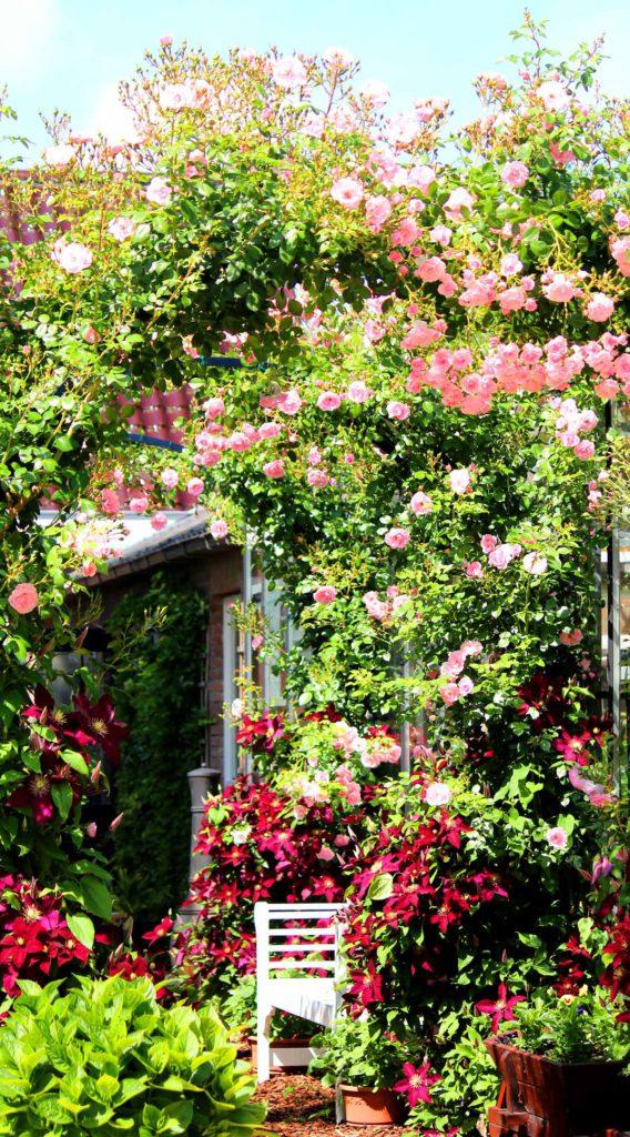 Roze rozen met clematis