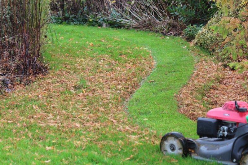 bladeren in gras weghalen