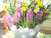 gemixte bloembollen