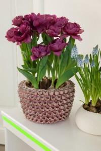 Tulpen in mandje