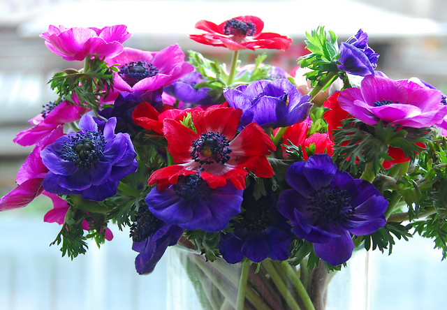 Anemoon in bloemenvaas