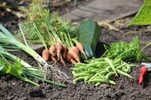 Eigen gekweekte groenten