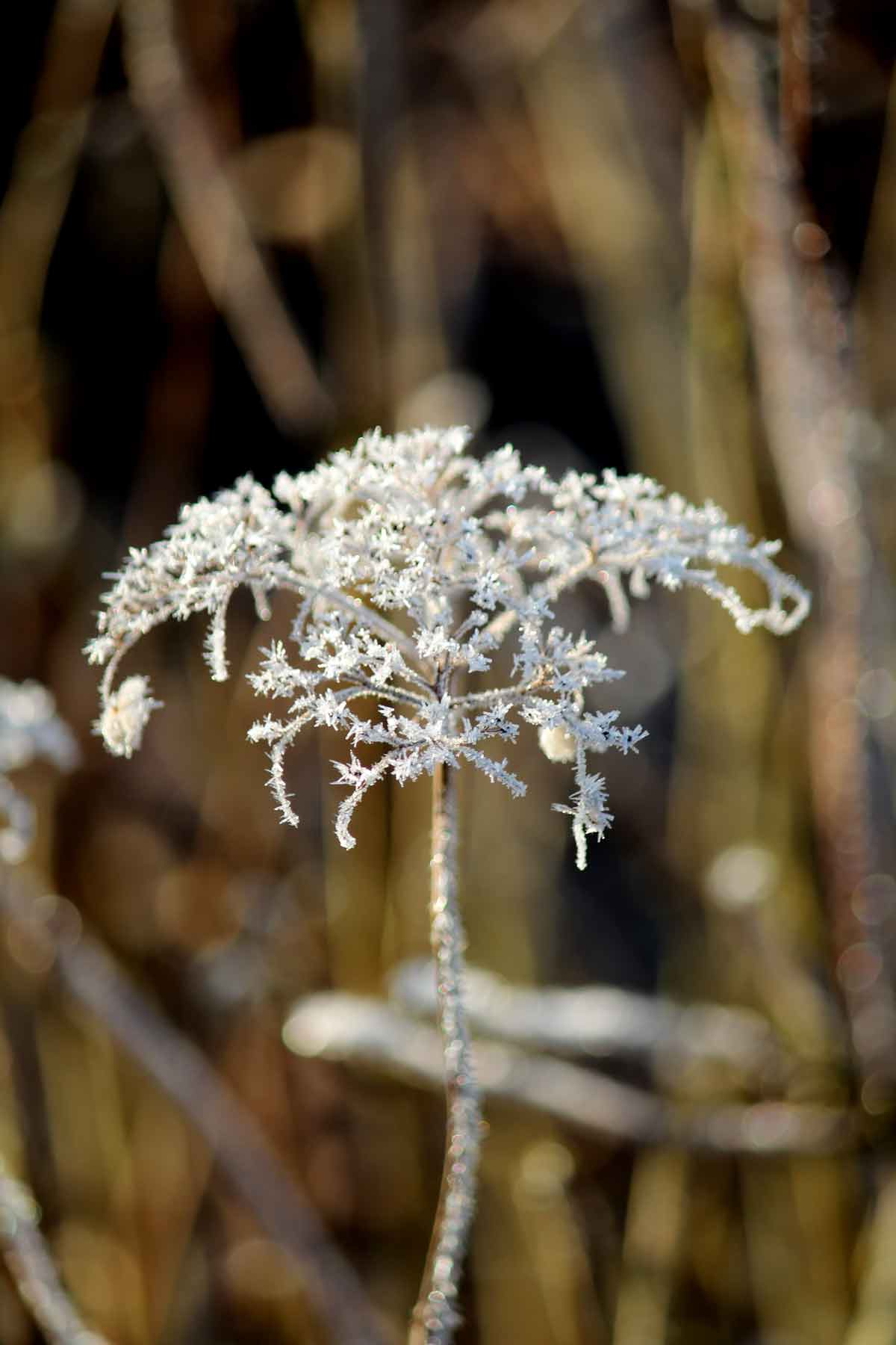 Winter-A-L
