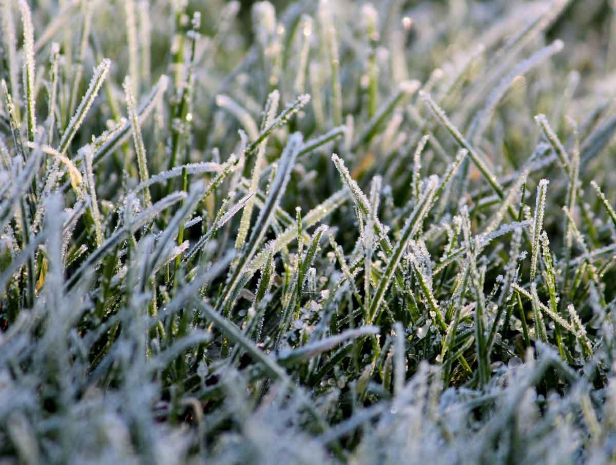 Winter---gras