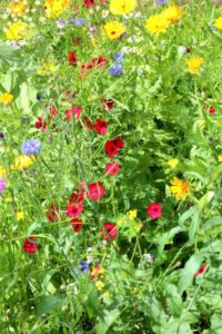 Bloemenmengsel vlinders tegen eikenprocessierups