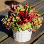 Hortensia bloemstukje