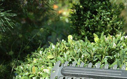 buxus heggenschaar op accu