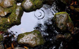 Plas water in ondergelopen tuin