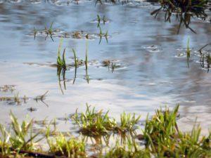 Plas water in gras - ondergelopen tuin