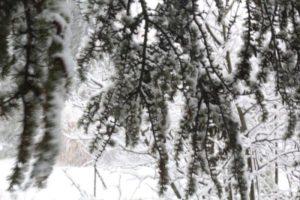 Den in de sneeuw