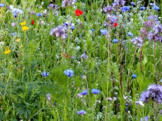Bloemenmengsel voor bestuivers