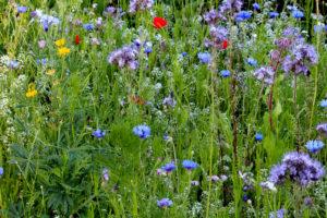 Bloemenmengsel voor bestuivers in tuin (klimaatvriendelijk)