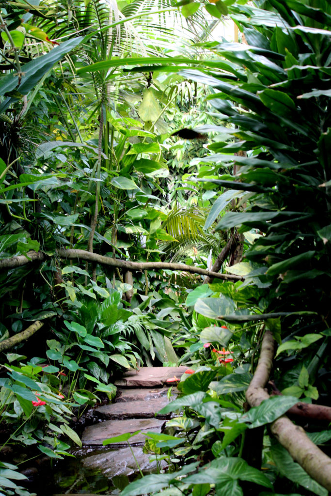 Tropische kas