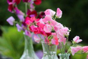 Lathyrus - parfum elfjes