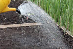 Meer biodiversiteit - water geven