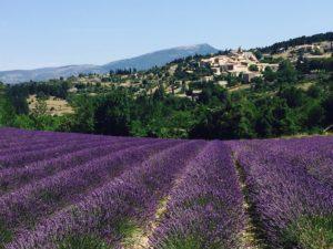 Mont Ventoux Lavendel