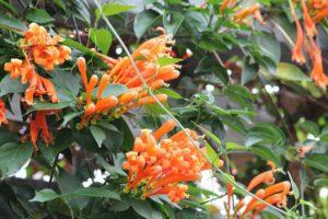 Felgekleurde klimplanten in tropische kassen