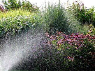 Droogte en vaste planten