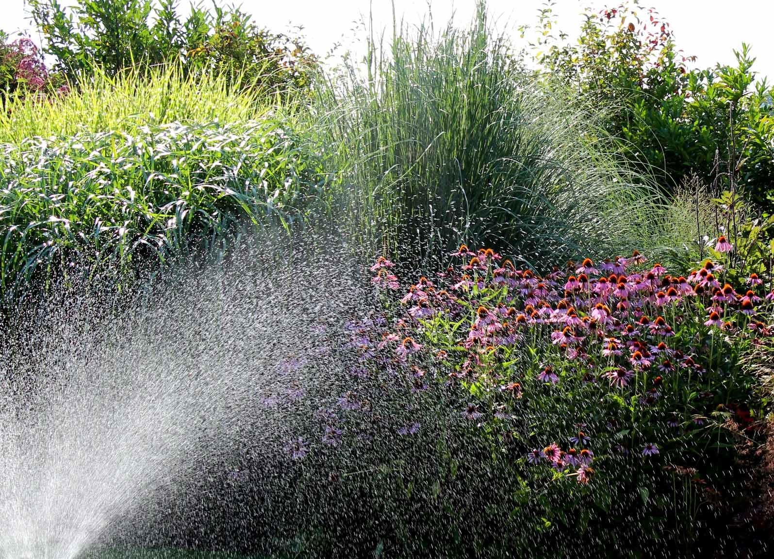 Afbeeldingsresultaat voor droogte van de tuin in de zomer