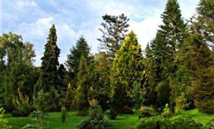 Pinetum de Belten